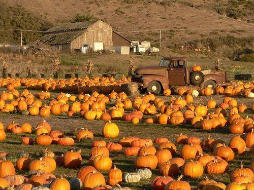 PumpkinField3-300dpi