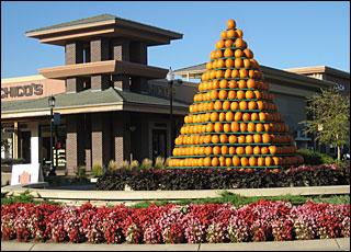 PumpkinTreeChicos_10-09